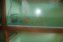baby fish 1.JPG