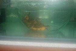 baby fish 3.JPG