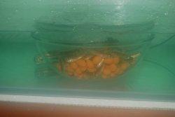 baby fish 4.JPG