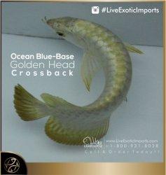 LiveExoticImports-OceanBlueCrossback-1.jpg