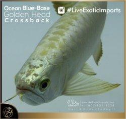 LiveExoticImports-OceanBlueCrossback-2.jpg