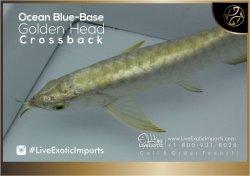 LiveExoticImports-OceanBlueCrossback-3.jpg