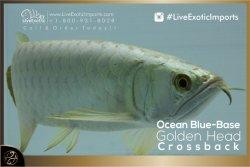 LiveExoticImports-OceanBlueCrossback-4.jpg