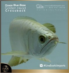 LiveExoticImports-OceanBlueCrossback-6.jpg