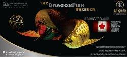 LEI-LiveExoticImports-DreamFishBossIsComing-AsianArowana-DragonFish.jpg